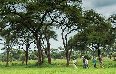 walking-safaris
